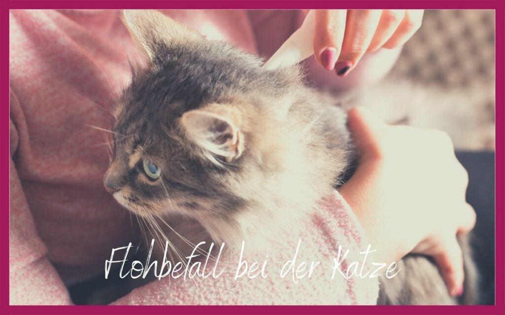 Sonja Tschöpe - Flohbefall bei der Katze
