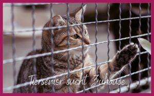 Sonja Tschöpe - Tiersenior sucht Zuhause