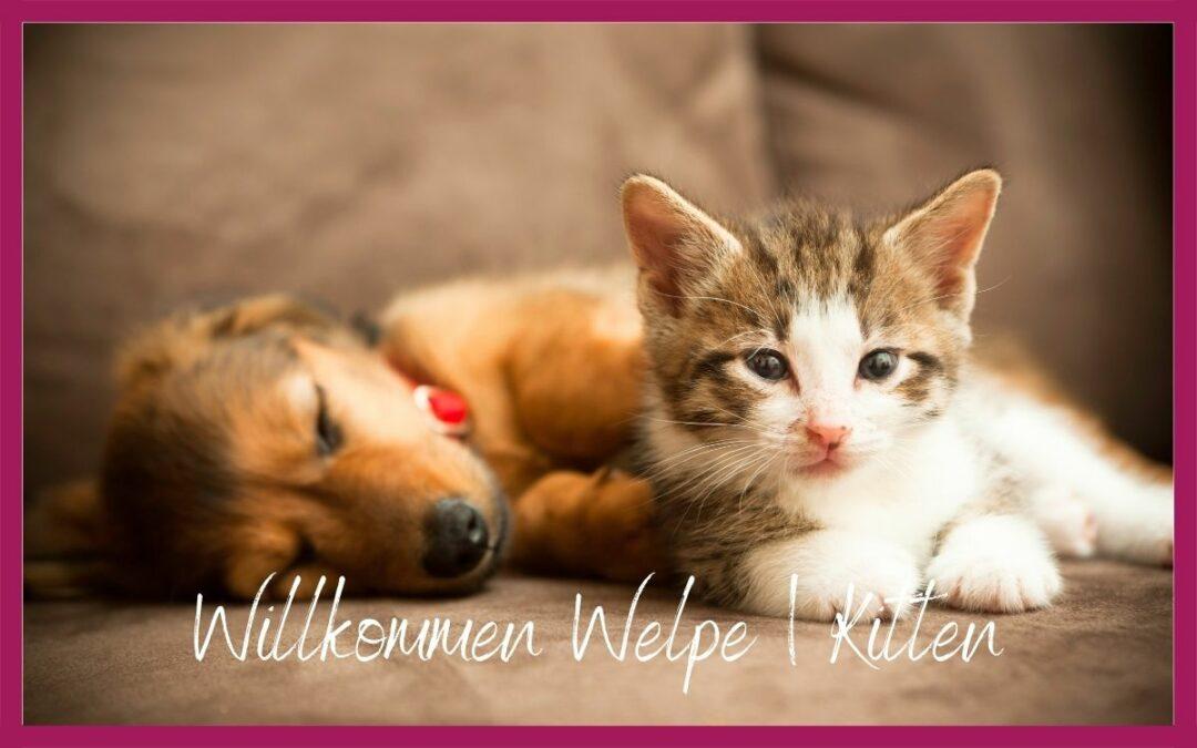 WILLKOMMEN WELPE | KITTEN