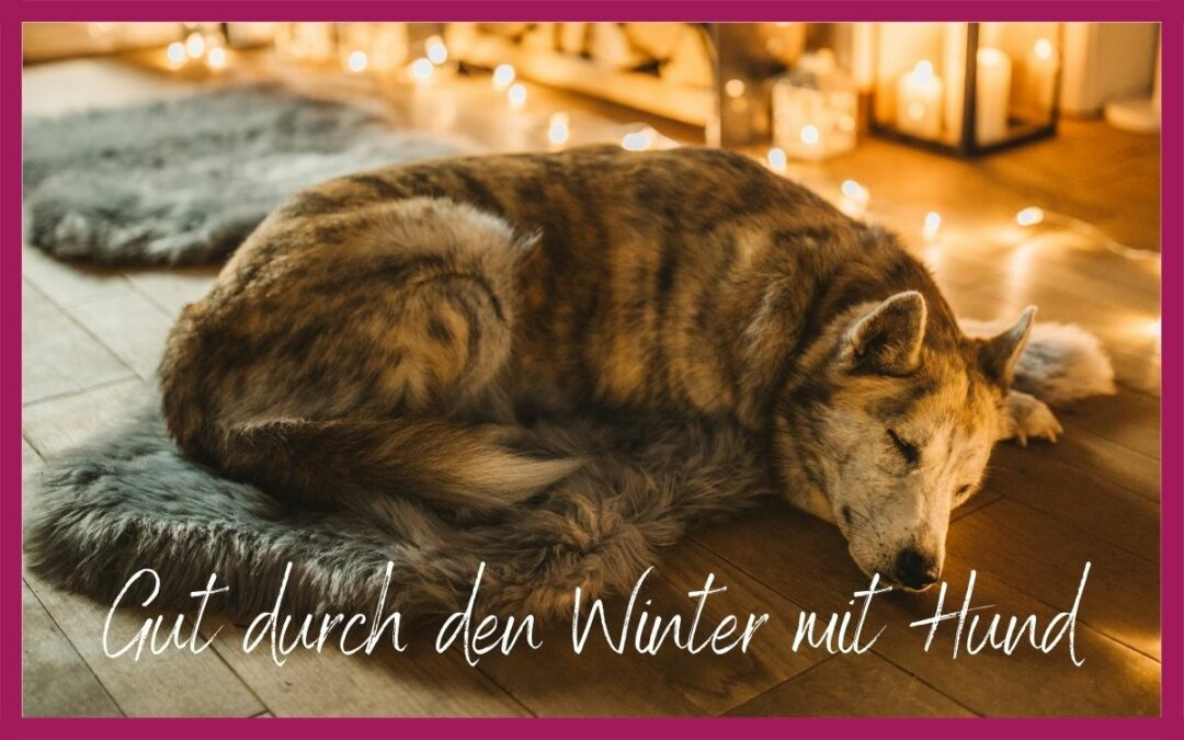 GUT DURCH DEN WINTER MIT HUND