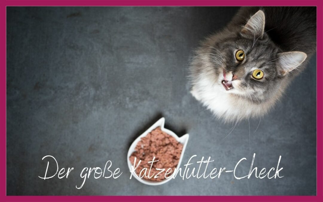 DER GROSSE KATZENFUTTER-CHECK
